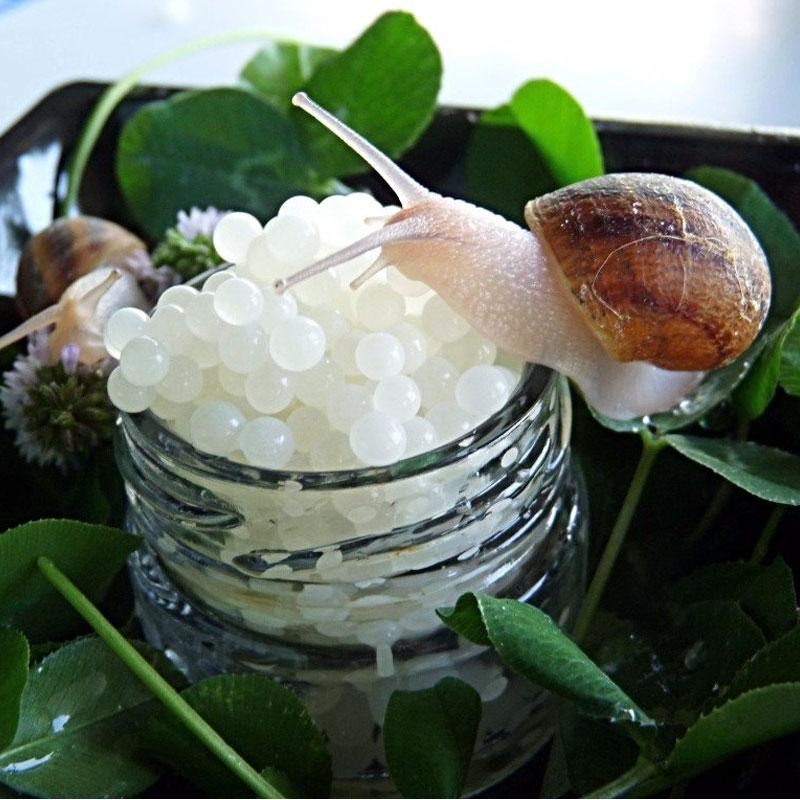 Caviar de caracol de sierra nevada